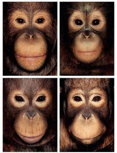 same facial features jpg 236x309
